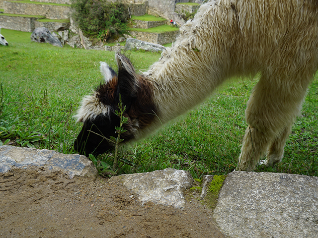 Por que planejar uma viagem para o Peru em 2018
