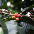 Visitando a fazenda de café Monthal Farm no Rio de Janeiro
